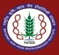National Agri-Food Biotechnology Institute – 12 Management Assistant, Computer Operator & Various Vacancies